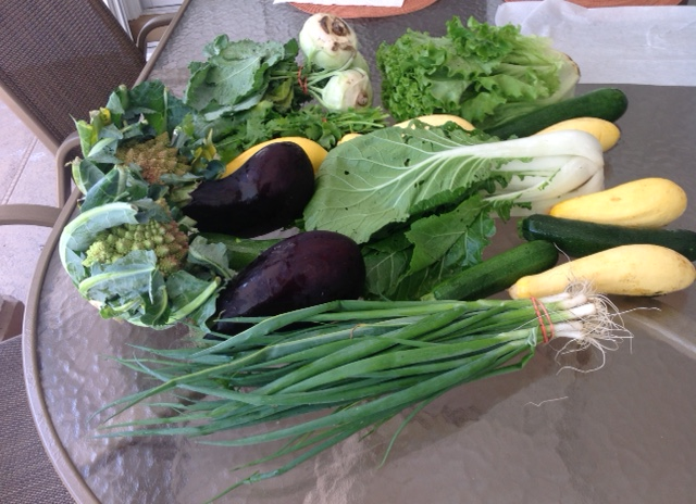 assortment of fresh vegetables including cucumbers, eggplants, green onions,greens, squash,turnips, and a zucchini.