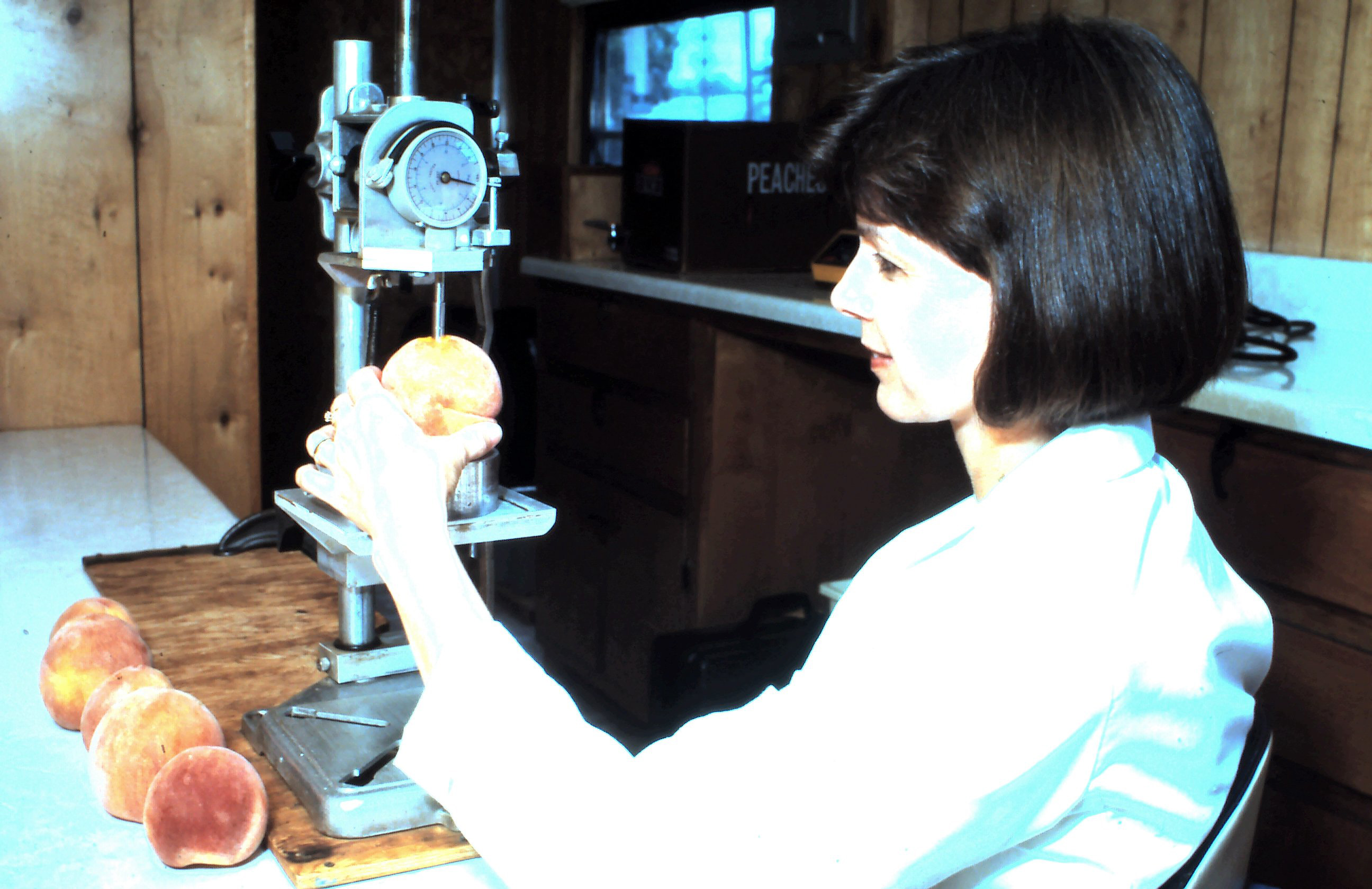 Technician using a drill press to measure peach firmness