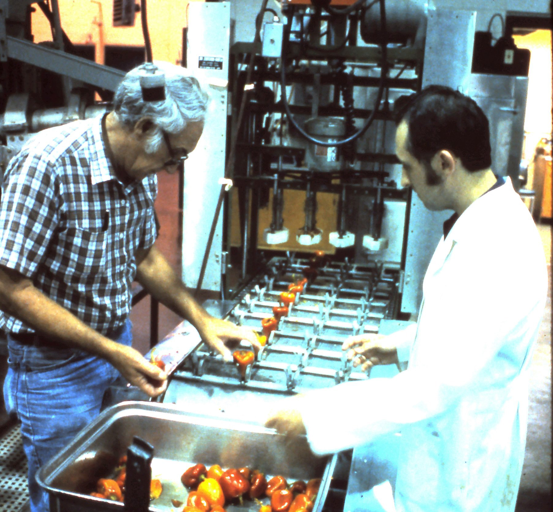 two research scientists setting up a coring machine with pimiento peppers