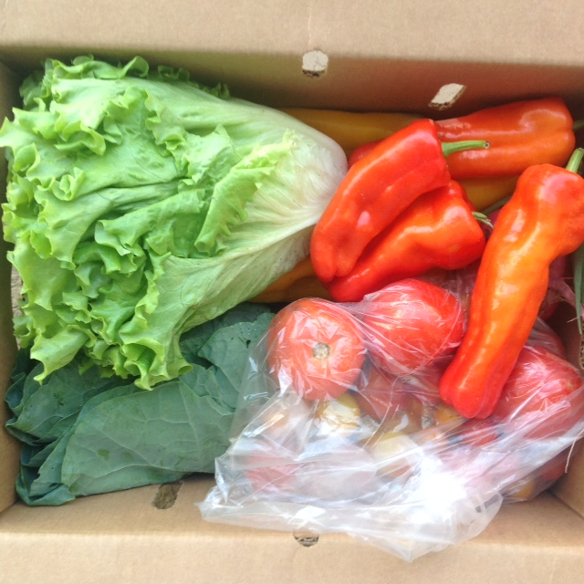 box of fresh lettuce, red peppers and bagged tomatoes