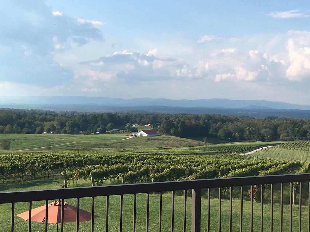Steph vineyard